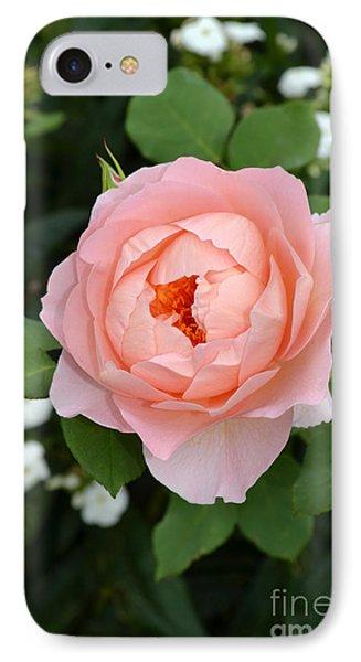 Pink Rose In Hamburg Planten Und Blomen IPhone Case