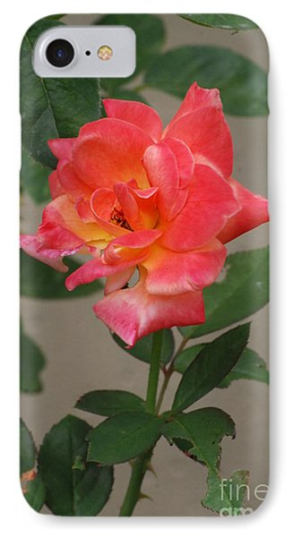 IPhone Case featuring the photograph Pink Rose by Mark McReynolds