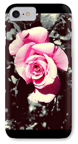 Pink Rosetta  IPhone Case by Sherry Flaker