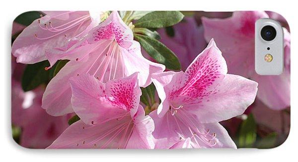Pink Star Azaleas In Full Bloom IPhone Case by Connie Fox