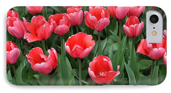 Pink Tulips IPhone Case by Diane Lent