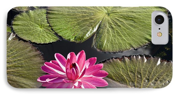 Pink Water Lily II Phone Case by Heiko Koehrer-Wagner