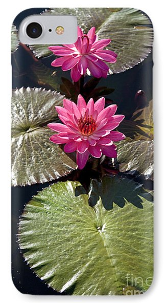 Pink Water Lily IIi IPhone Case by Heiko Koehrer-Wagner