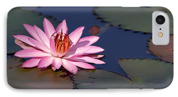 Pink Water Lily In The Spotlight Phone Case by Sabrina L Ryan
