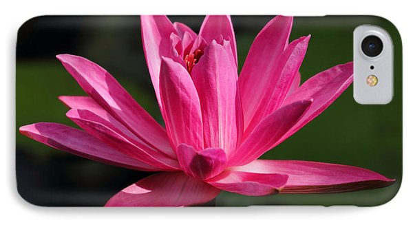 Pink Water Lily IPhone Case by Meg Rousher