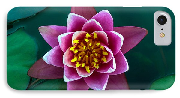 Rose Waterlily IPhone Case