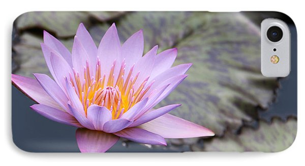 Pink Water Lily At Dusk IPhone Case by Yvonne Wright