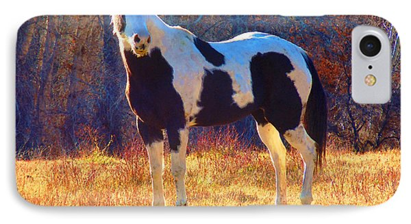 IPhone Case featuring the photograph Pinto In The Pasture by Anastasia Savage Ealy