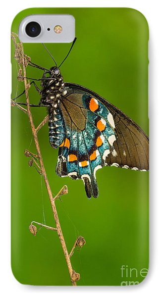 Pipevine Swallowtail IPhone Case by Anthony Heflin