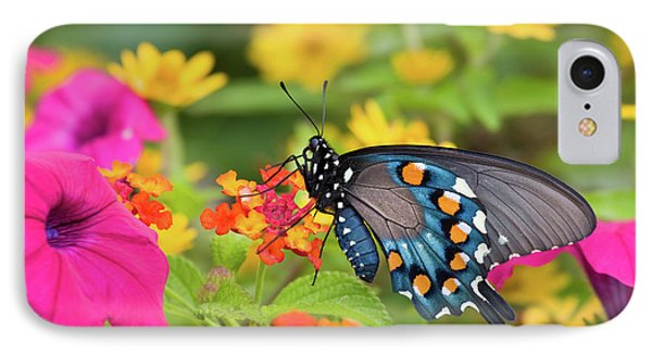 Pipevine Swallowtail Battus Philenor IPhone Case by Panoramic Images