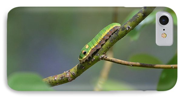 Pipevine Swallowtail Caterpillar IPhone Case by Jodi Terracina