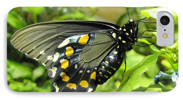 Pipevine Swallowtail IPhone Case by Jennifer Wheatley Wolf