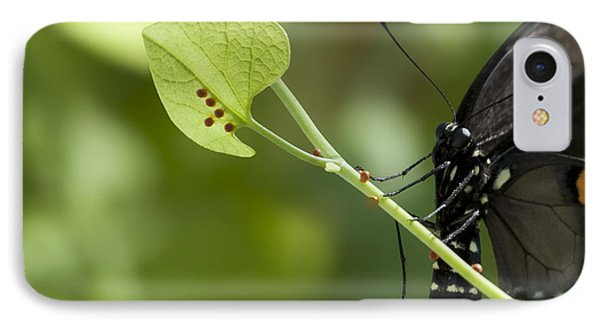 IPhone Case featuring the photograph Pipevine Swallowtail Mother With Eggs by Meg Rousher