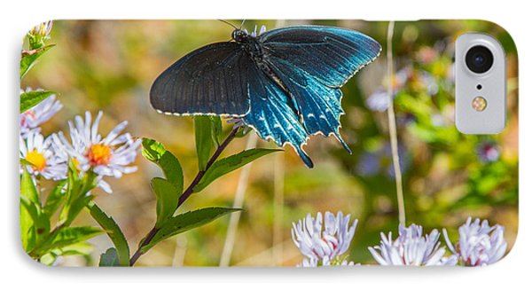 Pipevine Swallowtail On Asters Phone Case by John Haldane