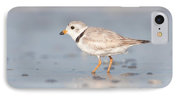 Piping Plover II Phone Case by Clarence Holmes