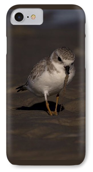 Piping Plover Photo IPhone Case by Meg Rousher