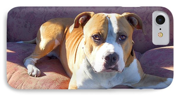 Pitbull On A Couch Phone Case by Ritmo Boxer Designs
