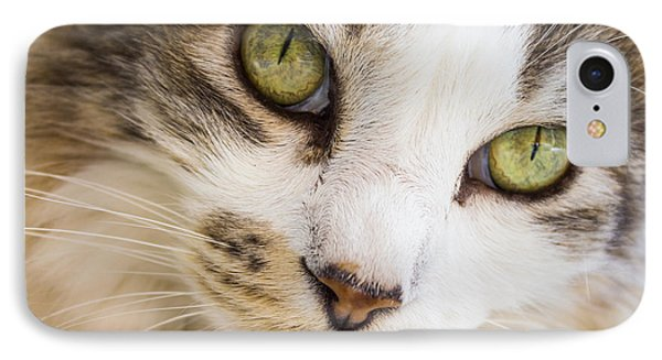 IPhone Case featuring the photograph Pixie-bob 1 by Leigh Anne Meeks