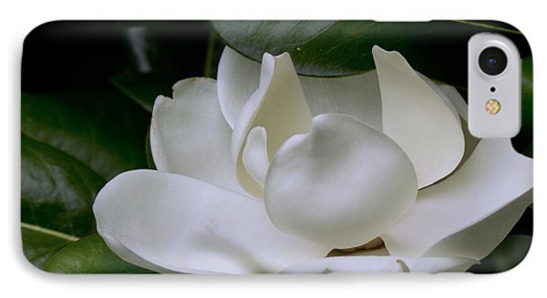 Plain Magnolia IPhone Case