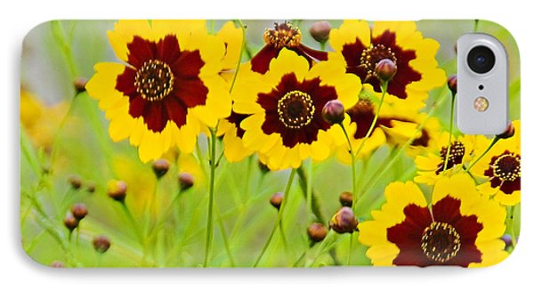 Plains Coreopsis IPhone Case