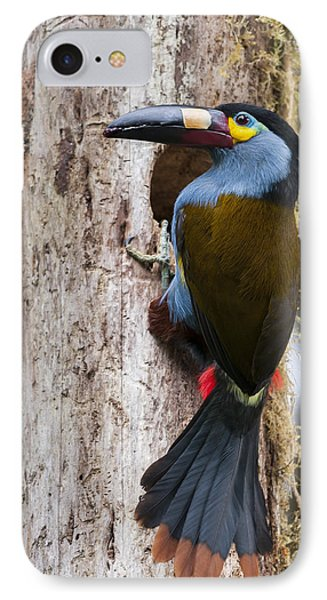 Plate-billed Mountain-toucan At Nest IPhone Case by Tui De Roy