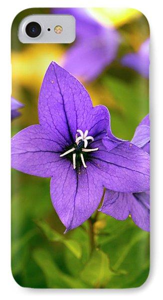 Platycodon Grandiflorus 'astra Blue' IPhone Case by Adrian Thomas