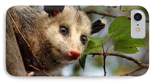 Playing Possum Phone Case by Nikolyn McDonald