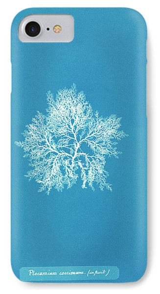 Plocamium Coccineum In Fruit IPhone Case by Natural History Museum, London