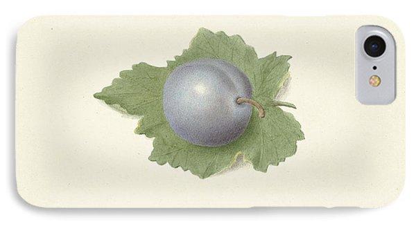Plum On A Leaf, Elisabeth Geertruida Van De Kasteele IPhone Case by Quint Lox