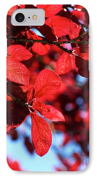 IPhone Case featuring the photograph Plum Tree Cloudy Blue Sky 2 by CML Brown