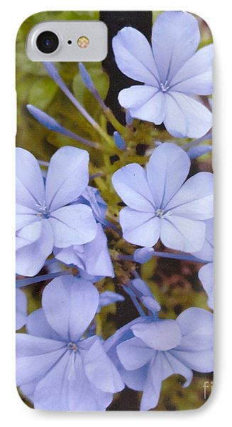 Plumbago Auriculata Or Cape Wort IPhone Case by Rod Ismay