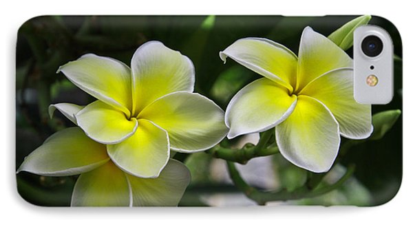 Plumeria IPhone Case by John Roberts
