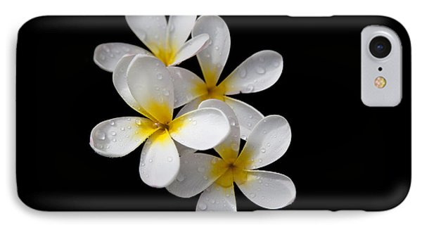 Plumerias Isolated On Black Background IPhone Case by David Millenheft