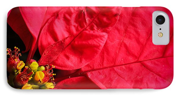 Poinsettia IPhone Case by Cathy Donohoue