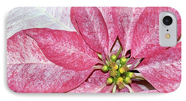 Poinsettia IPhone Case by Sami Martin