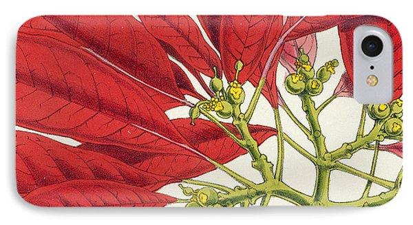 Poinsettia Pulcherrima IPhone Case by WG Smith