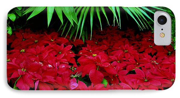 IPhone Case featuring the photograph Poinsettias And Palm by Tom Brickhouse