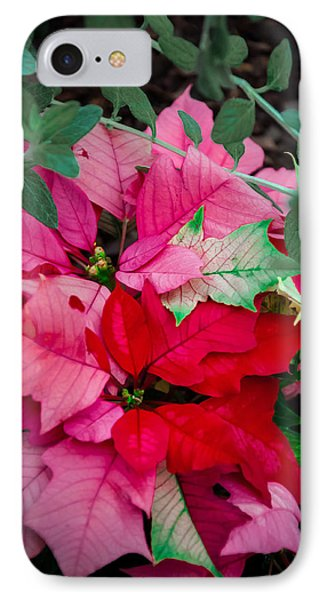 Poinsettias In Maturation Phone Case by Gene Sherrill