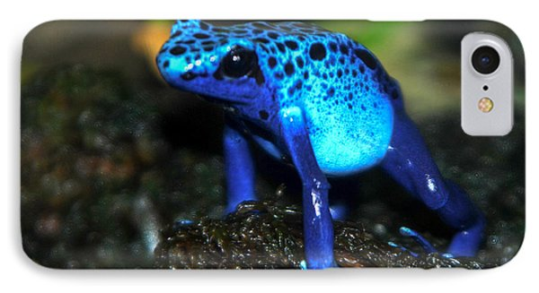 Poison Blue Dart Frog IPhone Case by Optical Playground By MP Ray