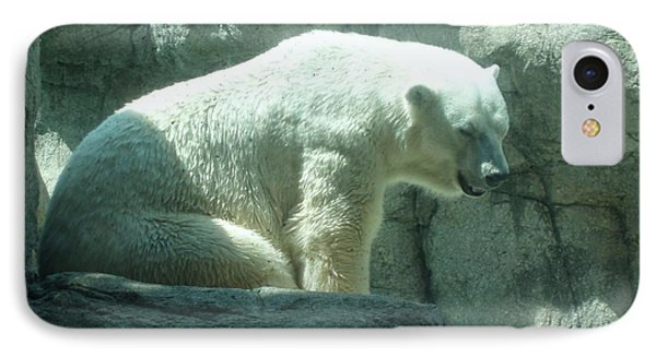 Polar Bear IPhone Case by Fortunate Findings Shirley Dickerson
