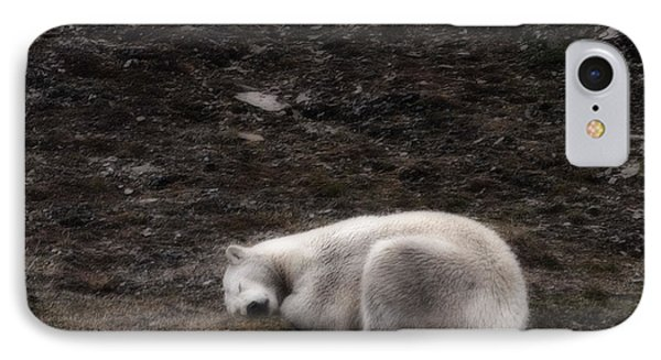 Polar Bear Sleeping, Spitsbergen IPhone Case by Panoramic Images