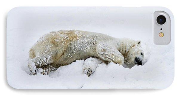polar bear Ursus maritimus IPhone Case by Lilach Weiss
