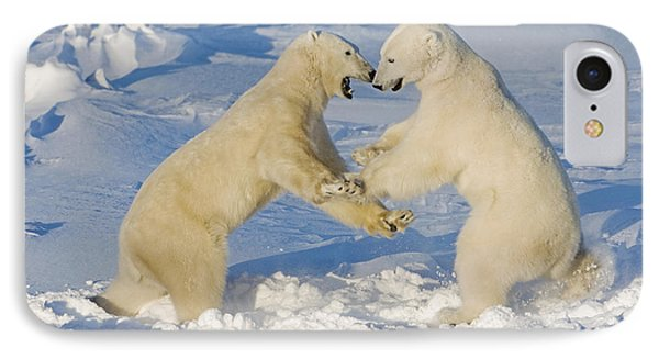 Polar Bears Wrestling And Play Fighting IPhone Case