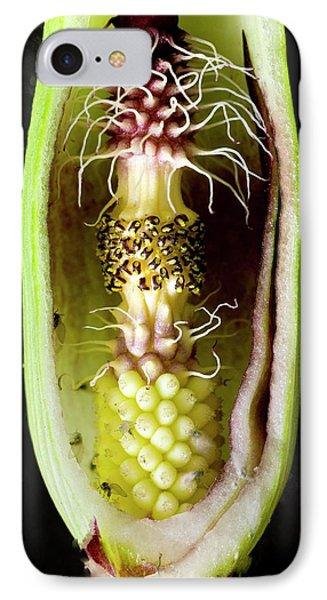 Pollination Mechanism Of Arum Apulum IPhone Case