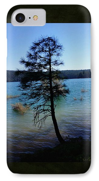 Pollock Pine IPhone Case by Sherry Flaker