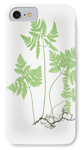 Polypodium Dryopteris IPhone Case by Artokoloro