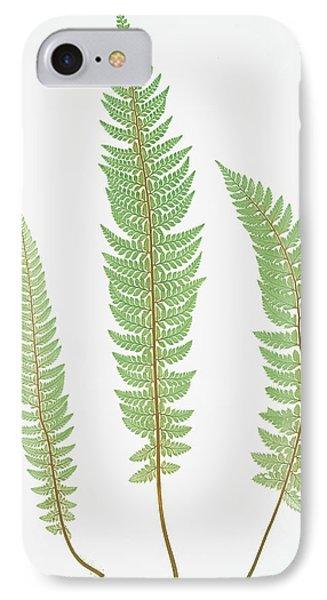 Polystichum Aculeatum Lobatum IPhone Case by Artokoloro