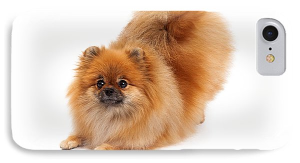 Pomeranian In Downdog Position IPhone Case