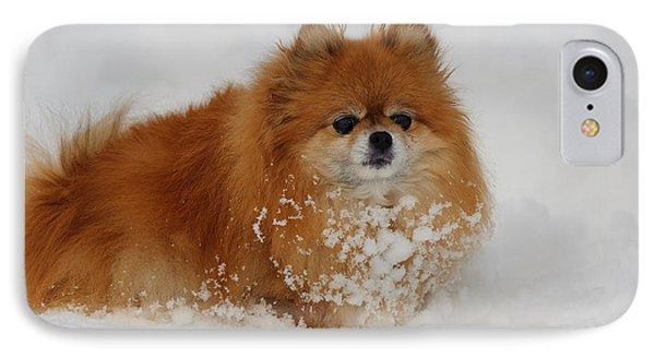 Pomeranian In Snow Phone Case by John Shaw