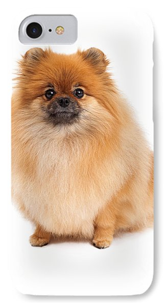 Pomeranian Sitting Looking Forward IPhone Case